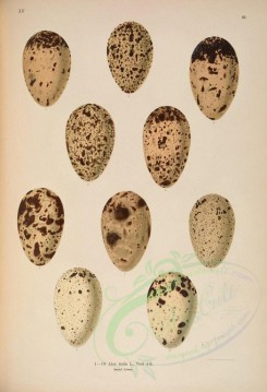 birds_parts_eggs-00899 - image [4957x7254]