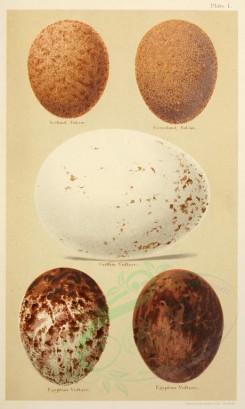birds_parts_eggs-01629 - image [2139x3564]