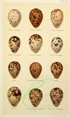 birds_parts_eggs-01680 - image [2139x3564]