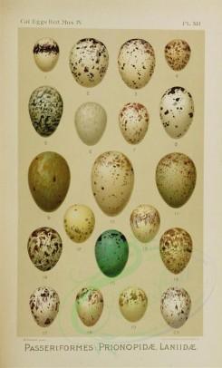birds_parts_eggs-01744 - image [1461x2421]