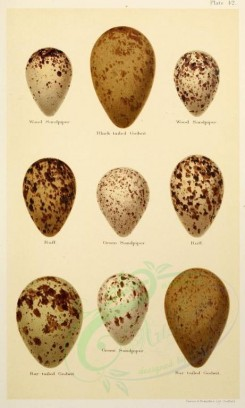 birds_parts_eggs-01906 - image [536x892]