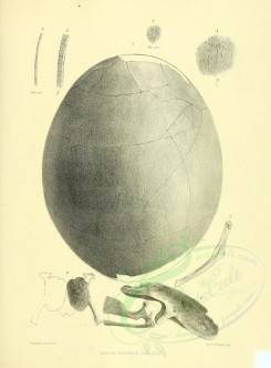 birds_parts_eggs-01986 - (black-and-white) [2676x3622]