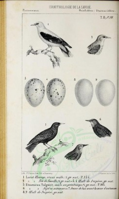 birds_parts_eggs-02133 - (black-and-white) [2460x4108]