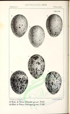 birds_parts_eggs-02170 - (black-and-white) [2517x4090]