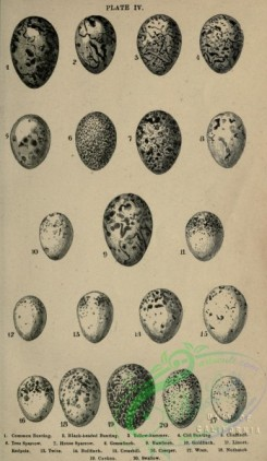 birds_parts_eggs-03984 - black-and-white 015