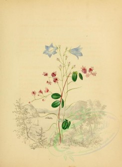 blue_flowers-00554 - Hare-Bell and Lespedeza [1909x2616]
