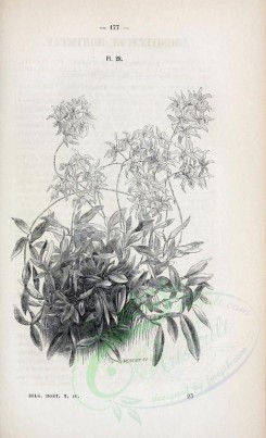 botanical-03956 - black-and-white 009-unspecified plant