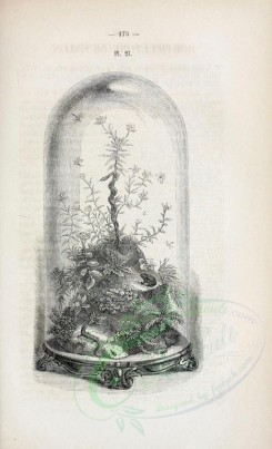 botanical-03972 - black-and-white 025-Rocks with ferns and reptiles under glass