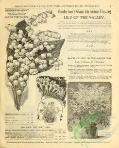 botanical-19577 - black-and-white 270-Lily of the Valley