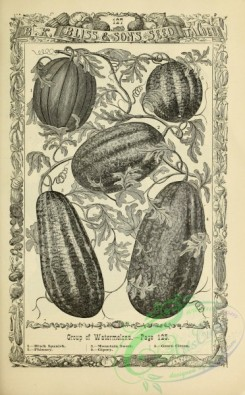 botanical-21191 - black-and-white 036-Watermelons