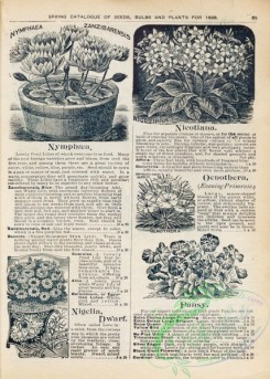 botanical-22078 - black-and-white 063-nymphaea, nicotiana, pansy