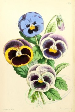 bouquets_flowers-00003 - Pansies Fancy [1795x2703]