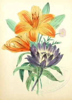 bouquets_flowers-00023 - Orange or Tiger Lily [1905x2650]
