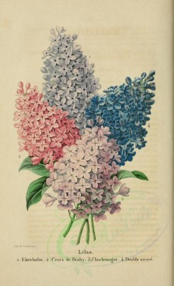 bouquets_flowers-00154 - lilas [2145x3523]