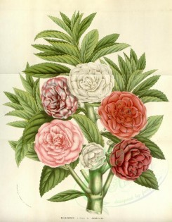 bouquets_flowers-00301 - balsamines camellias [3589x4617]