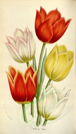 bouquets_flowers-00304 - Tulips [2075x3613]