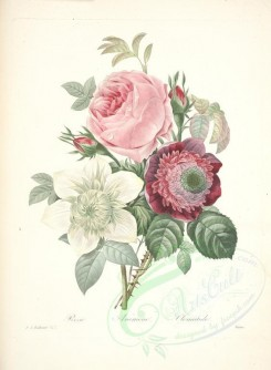 bouquets_flowers-00338 - rosa, anemone, clematis [4718x6418]