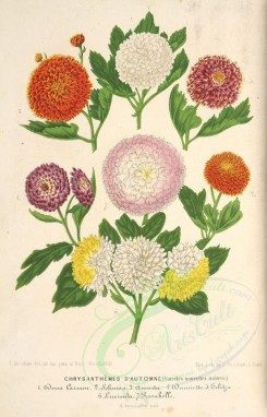 bouquets_flowers-00359 - chrysanthemum [3779x5886]