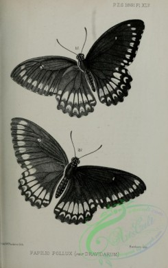 butterflies_bw-00044 - black-and-white 040