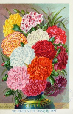 carnation-00168 - 028-Carnations in vase [3068x4799]