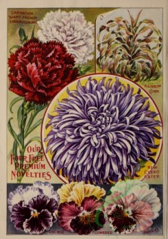 carnation-00177 - 077-Carnation, Corn plant,, Aster, Pansies [3215x4566]