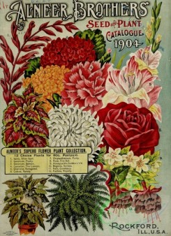 carnation-00224 - 078-Flowers, Ferns, Rose, Chrysanthemum, salvia, geranium, carnation, gladiolus, coleus, honeysuckle, fuchsia [2605x3589]