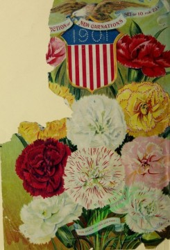 carnation-00285 - 018-American flag, patriotic, Carnations [2807x4120]
