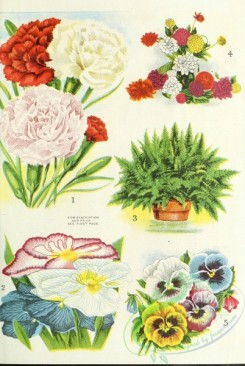 carnation-00300 - 180-Pansies, Ferns, dianthus [2159x3216]