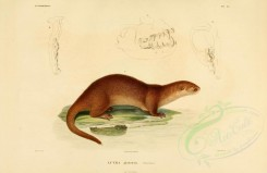carnivores_mammals-00135 - Neotropical otter [3870x2513]