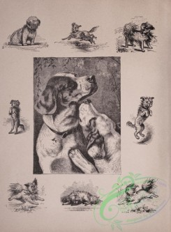 cassells_natural_history-00001 - 002-Dogs