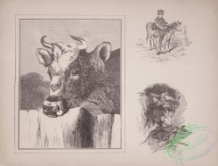 cassells_natural_history-00012 - 013-Cow, Bull