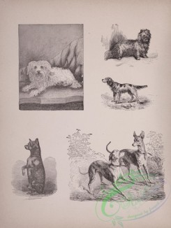 cassells_natural_history-00013 - 014-Dogs