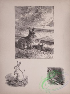 cassells_natural_history-00023 - 024-Hare