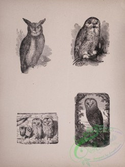 cassells_natural_history-00025 - 026-Owls