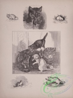 cassells_natural_history-00029 - 030-Cats
