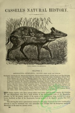 cassells_natural_history-00044 - 001-Water Deerlet or Chevrotain