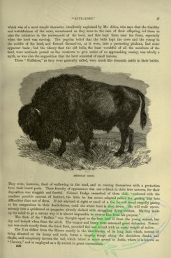 cassells_natural_history-00068 - 025-American Bison