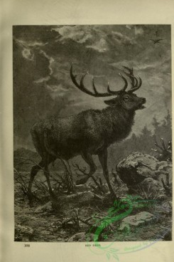cassells_natural_history-00078 - 035-Red Deer