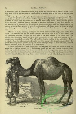 cassells_natural_history-00096 - 054-Camel