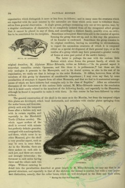 cassells_natural_history-00115 - 073-Lophiomys