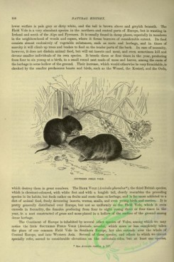 cassells_natural_history-00120 - 078-Southern Field Vole