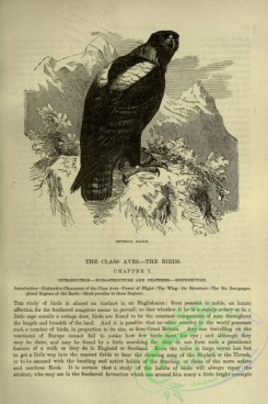 cassells_natural_history-00176 - 136-Imperial Eagle