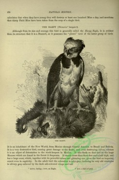 cassells_natural_history-00186 - 146-Harpy
