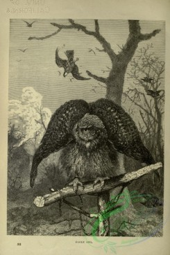 cassells_natural_history-00196 - 156-Eagle Owl
