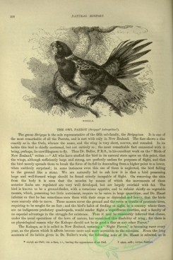 cassells_natural_history-00204 - 164-Rosella