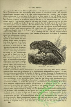cassells_natural_history-00205 - 165-Owl Parrot
