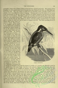 cassells_natural_history-00218 - 178-Common Kingfisher