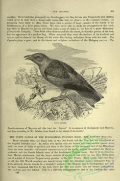 cassells_natural_history-00226 - 186-Blue Roller