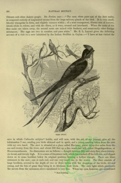 cassells_natural_history-00233 - 193-Tree Swift