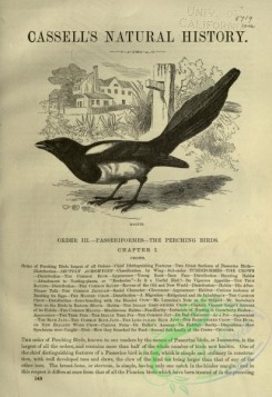 cassells_natural_history-00240 - 003-Magpie